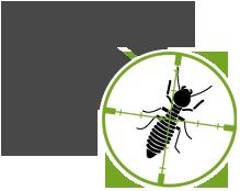 organic Termite extermination Dumfries