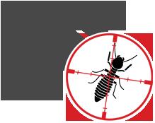 Termite Control Dumfries