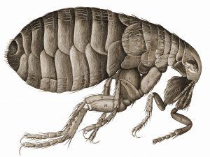 flea and tick control